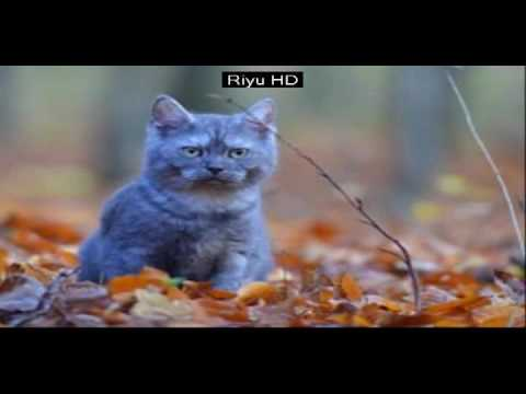oooh.. so cute.. cat picture best ever! | riyu hd