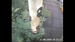Live Animal Cam Streams UK