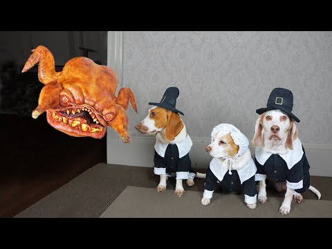 Pilgrim Dogs vs. Turkey Monster Prank! Funny Dogs Maymo, Potpie & Penny