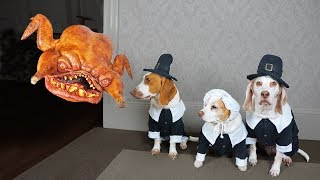 pilgrim-dogs-vs-turkey-monster-prank-funny-dogs-maymo-potpie-penny