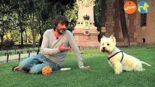 Conocemos A La Mascota De... Fernando Tejero - Más Que Perros Y Gatos 1