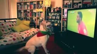 Cachorro assistindo jogo e comemorando Gol