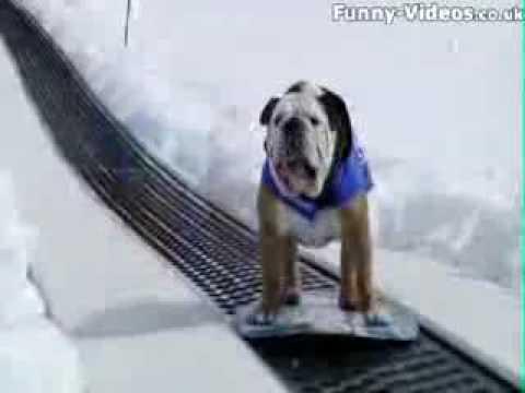 snowboard bulldogs