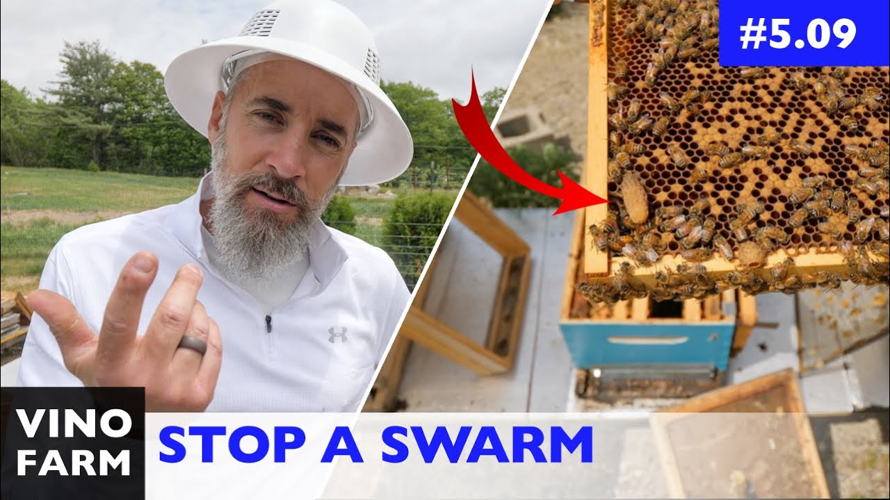 How to Prevent a Swarm... By Accident? (Lessons Learned)