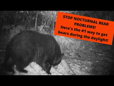 Bear Hunting's #1 reason for Nocturnal Bears