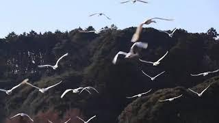 東庄町夏目の堰にて。 Weather report video in Japan Location Asahi-c...