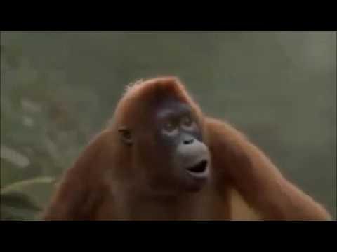 Affe tanzt hoch die hände wochenende😂😂😂