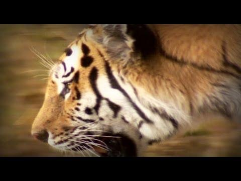 La Guerra del Tigre (documental completo)