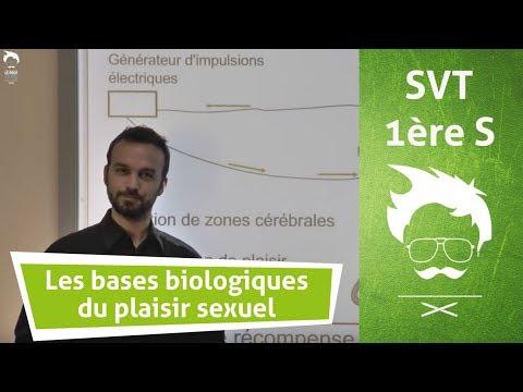 Les bases biologiques du plaisir sexuel