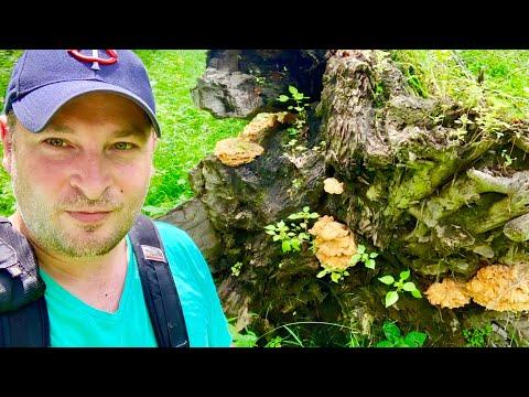 Mushroom Forage ~ 20+ Different Mushroom Types ~ Minnesota Mushrooms