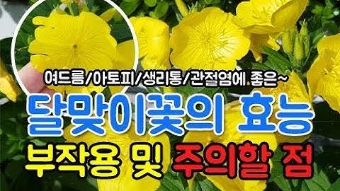 달맞이꽃 종자유 효능 부작용~ 여드름,아토피,생리통,성인병에 좋은~Evening primrose