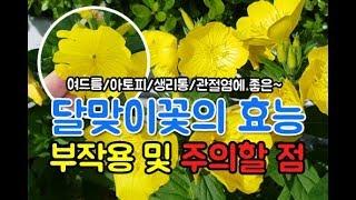 달맞이꽃 종자유 효능 부작용~ 여드름,아토피,생리통,성…