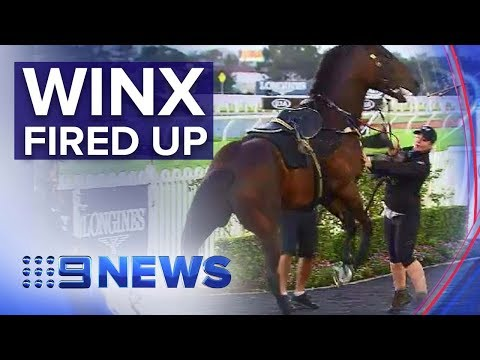 Winx set for farewell race after paparazzi scare  Nine News Australia