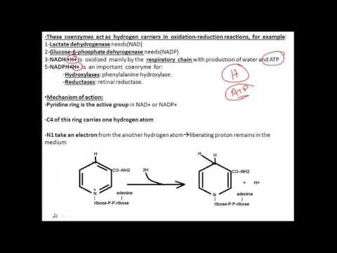 biochemistry vitamins B3 (niacin) فيتامين بايوكيميستري