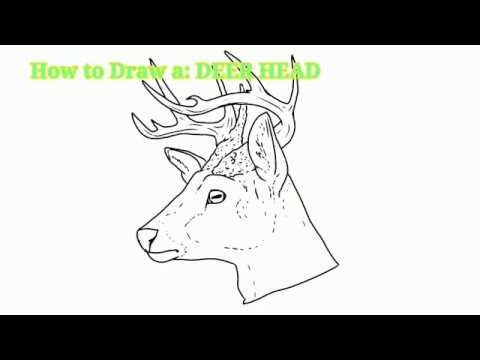 how to draw a deer head youtube. Black Bedroom Furniture Sets. Home Design Ideas