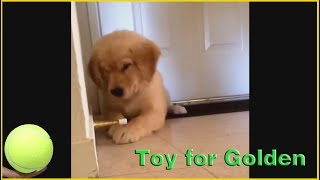 Indestructible Dog Toys Made in USA