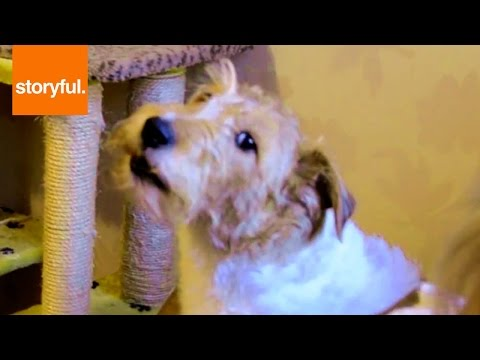 Dog Is A Karaoke Star