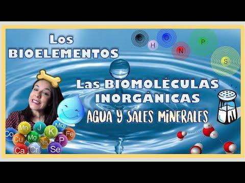 bioelementos-y-biomoléculas-inorgánicas.-2º-de-bachiller---bio[eso]sfera