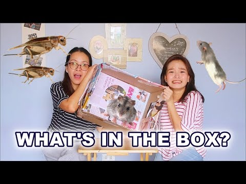 *EXTREME* WHAT'S IN THE BOX CHALLENGE | Haidee and Hazel