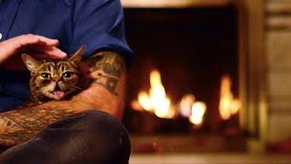 Lil BUB's NEW Magical Yule LOG Video (2014) thumbnail