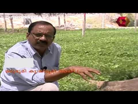Gulf Focus   Agriculture cultivation in Bahrain