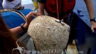 Project Kaisei  - Jim Leichter - Marine Debris - Great Pacific Garbage Patch - Scripps