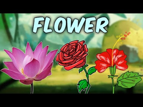 Learn English Flower Names With Pictures | Characteristics Of Different Flowers | Educational Videos