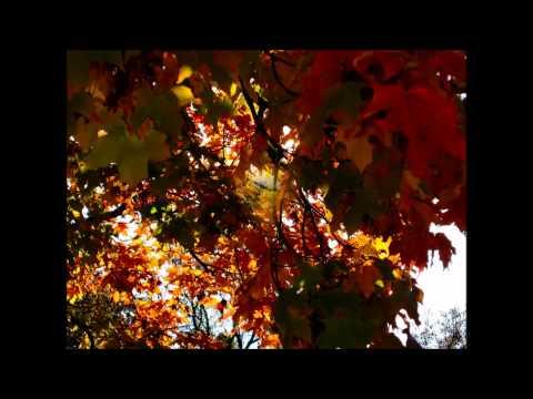 Fors - Осенняя Любовь