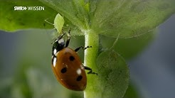 Die Marienkäfer-Verwandlung: So wird aus einem Löwen ein Käfer