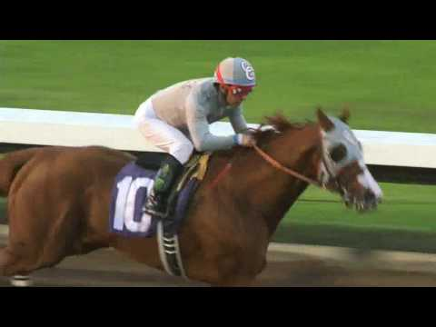 The legend California Chrome's final start in California at Los Aalmitos- 12/17/16