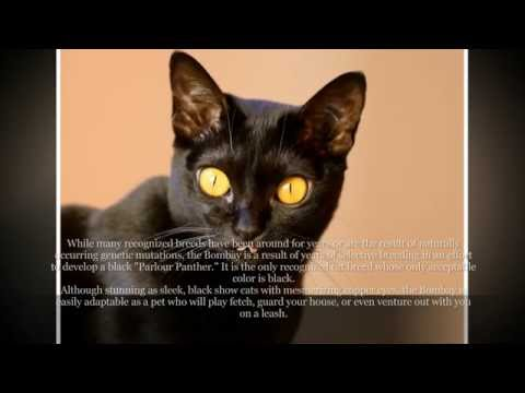 7 Facts About Black Cats