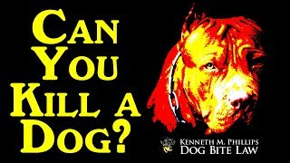 Can You Kill a Dog?