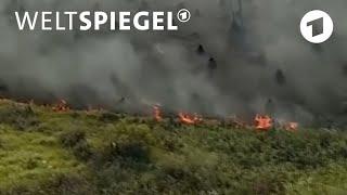 Amazonas: Bilanz der Brände | Weltspiegel