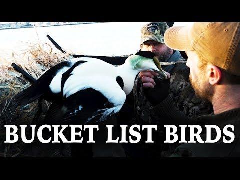 Bucket List Hunt | Sea Ducks In Massachusetts