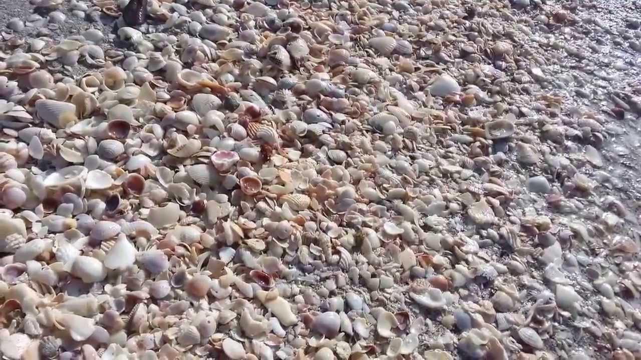 Shells At Turner Beach Sanibel Captiva Florida