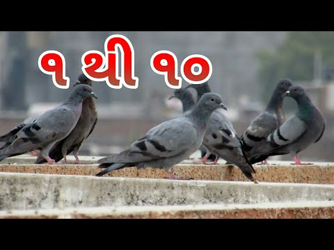 Learn Numbers (1 to 10 in Gujarati) by Pigeons