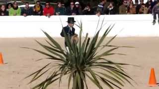 The Cutest Dressage Test You Will Ever See! Video By Trevor Fryatt