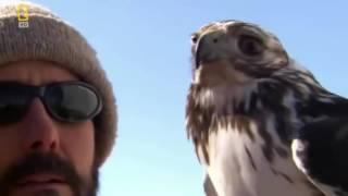 Сила птиц хищников документальный фильм