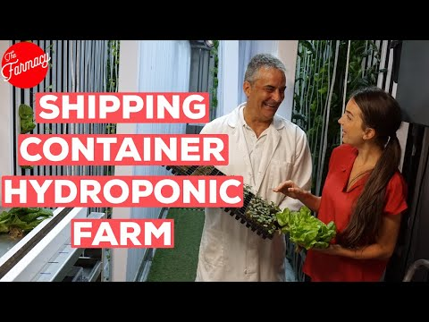 Inside A HYDROPONIC SHIPPING CONTAINER Farm!