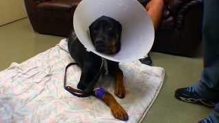 Who Shot Rango, A Gentle Rottweiler From Milwaukee