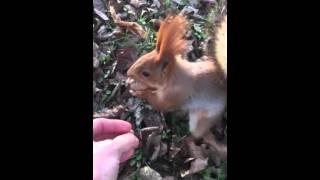 видео Новая Каховка (Херсонская область)