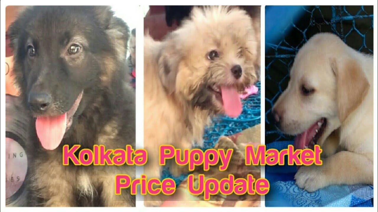 Kolkata Dog/Puppy Market Price Update | Beagle,Lhasa,Labrador,German  Shepherd,Samoyed|EXPRESS GUIDE
