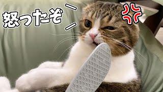 猫用しゃもじを使ったらマジギレされました…