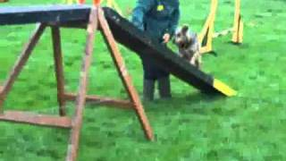 Dogs Trust Bridgend: Sasha On Agility