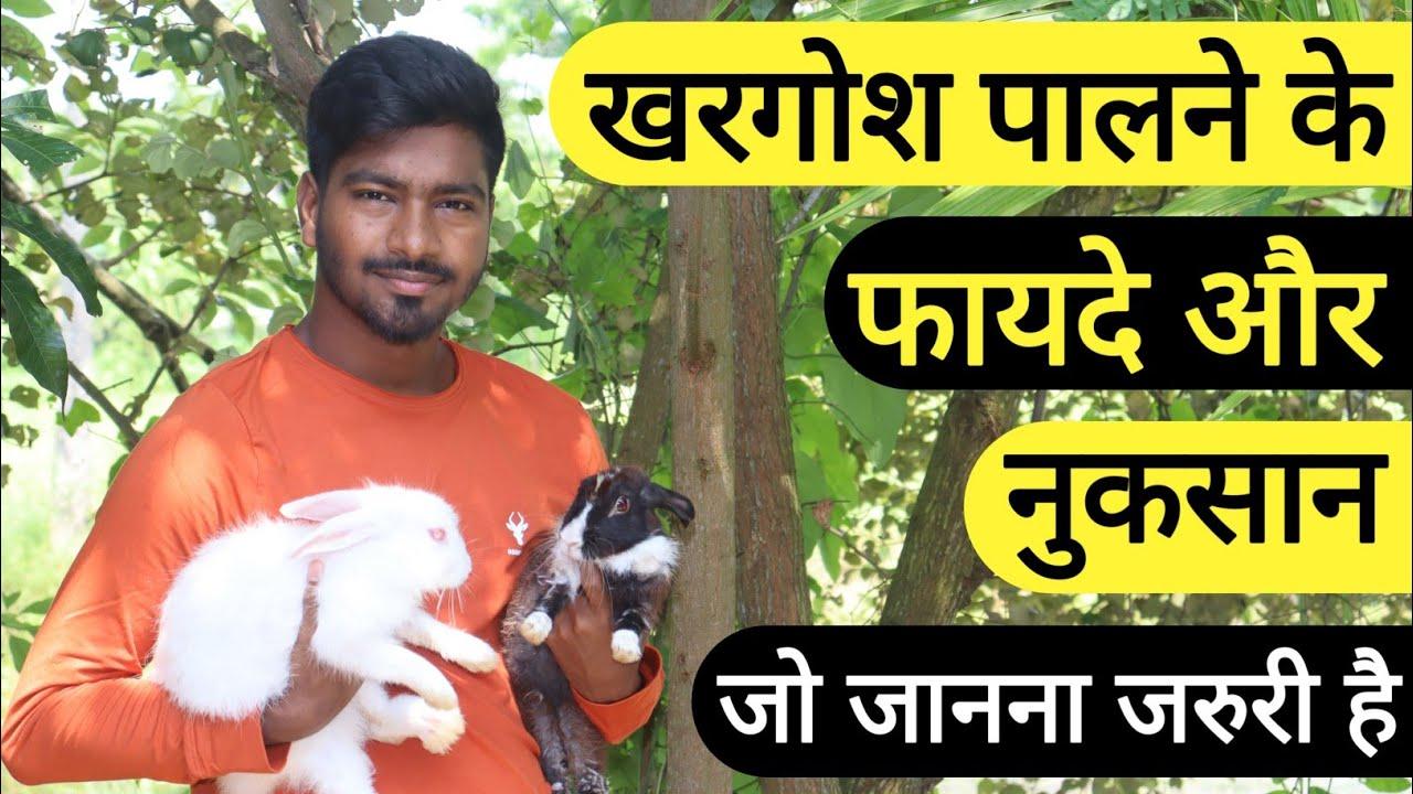 Khargosh Palne Ke Nuksan Or Fayde | घर में खरगोश रखने से क्या होता है?