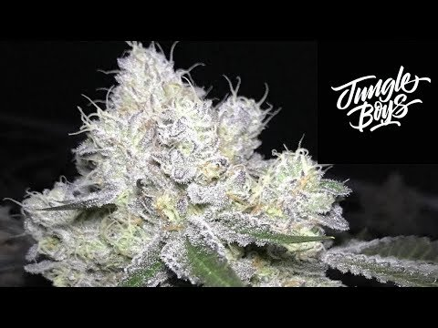 Strain Review Saturday Ep. 15: Jungle Boys Wedding Cake