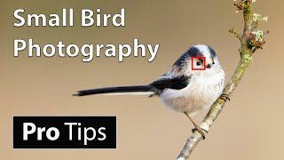 How to Photograph Small Birds: Camera Settings & Techniques (Advanced)