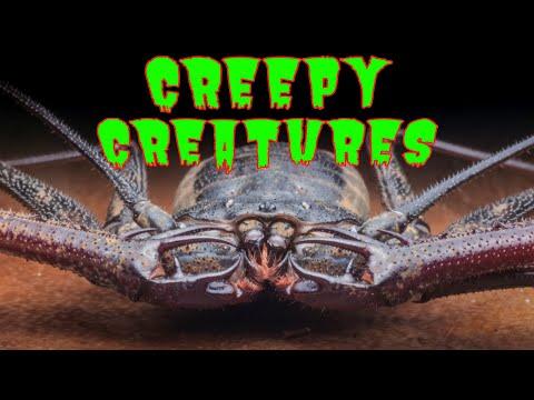 Top 10 Creepiest Scorpions, Spiders, & Invertebrates in the Tarantula Collective