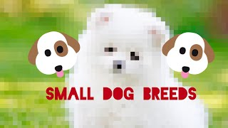 44 SMALL dog breeds!!