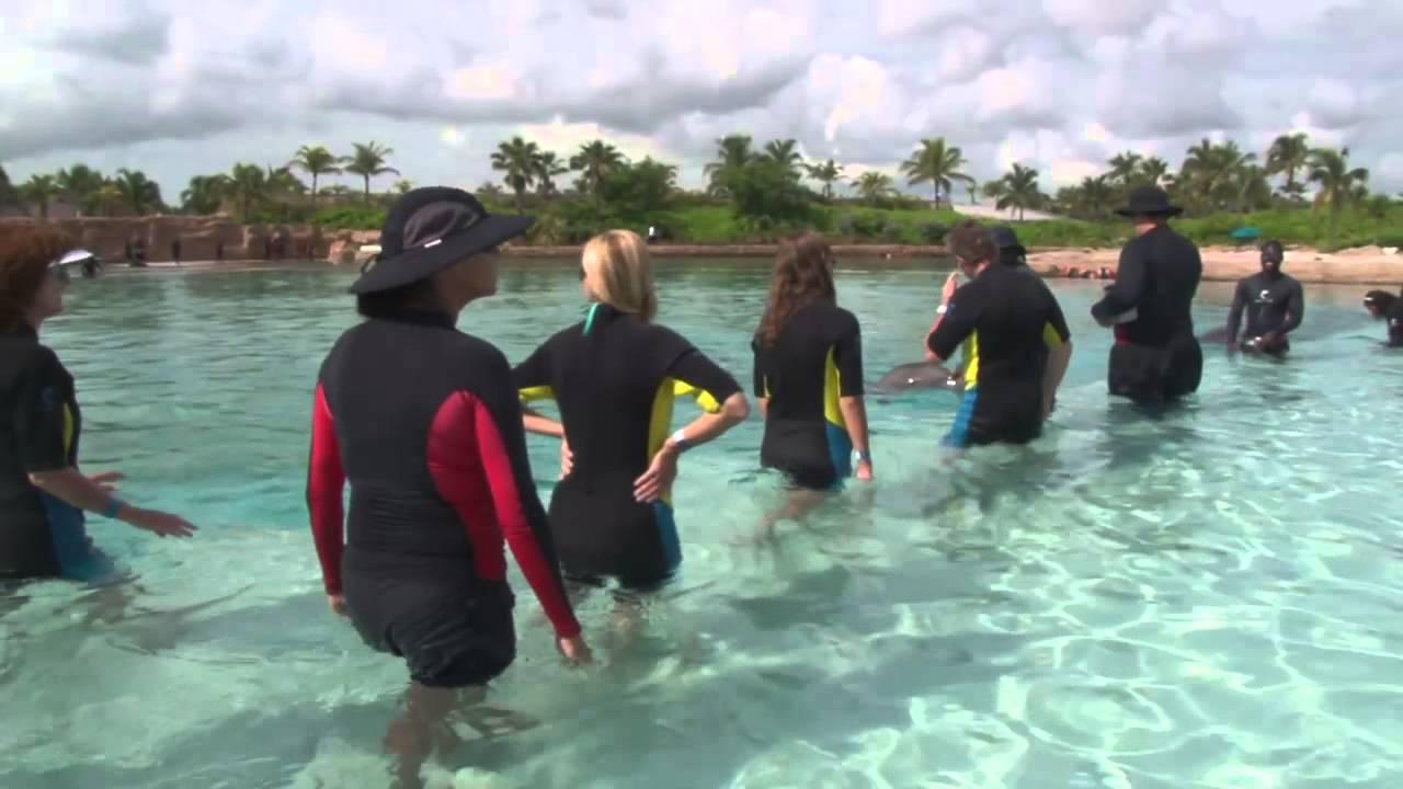 Atlantis Dolphin Cay Interaction Youtube